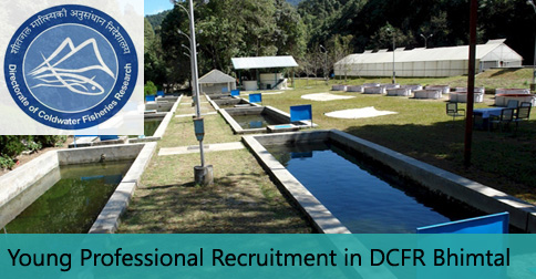 Young Professional Vacancy in DCFR Bhimtal