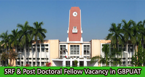 SRF & Post Doctoral Fellow Vacancy in GBPUAT