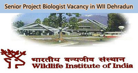 Senior Project Biologist Vacancy in WII Dehradun