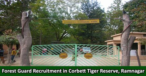 Forest Guard Recruitment in Corbett Tiger Reserve, Ramnagar