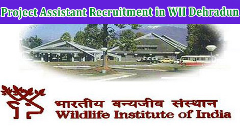 Project Assistant Recruitment in WII Dehradun