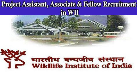 Project Assistant, Associate & Fellow Recruitment in WII