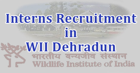 Interns Recruitment in WII Dehradun