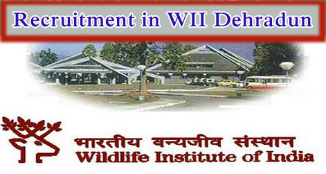Project Scientist, Assistant, Associate & Fellow Recruitment in WII Dehradun