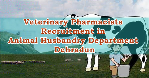 Veterinary Pharmacists Recruitment in Animal Husbandry Department Dehradun